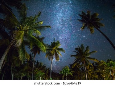 Night shot with palm trees and milky way in background, tropical warm night