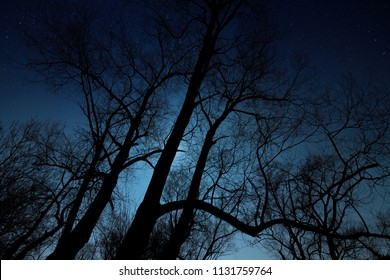 Night shot of a tree silhouette with moonlight and stars.