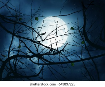 A night sky with a full moon and many branches in back light