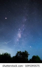night sky with milky way popping out brightly on the trees silhouette