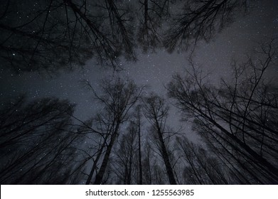 Night sky with stars above birch forest