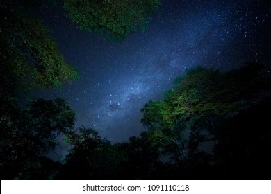 Night sky with stars and milky way through trees over reserve Moremi in Okavango delta. African wildlife photography, Botswana.