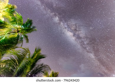 Night sky with stars and palms at wind.