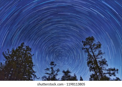 Night Sky with Tree