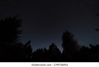 Night starry sky, the edges of the black outlines of trees in the forest