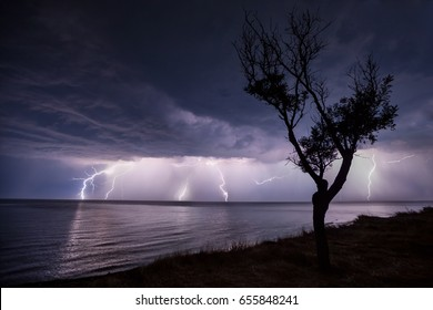 night storm at sea, a tree on the beach