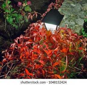 Night street lamp with red plant in the garden closeup