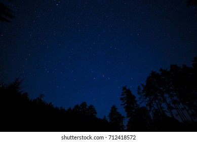 Night time star covered sky with tree silhouettes