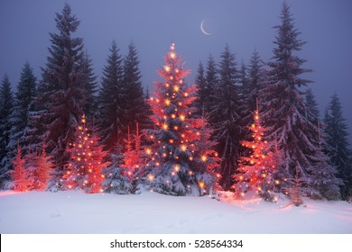 night in the Ukrainian Carpathians, on New Year's golden spruce, with a haze of golden light shine in fog with spectacular light effects Wild forest with Christmas tree after a snow storm  blizzard