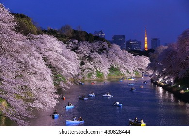Night view of massive cherry blossoming with Tokyo tower as background. Photoed at Chidorigafuchi, Tokyo, Japan.