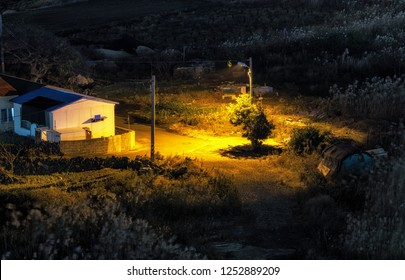 The night view of a small countryside house illuminated by street light surrounded by tall reeds.