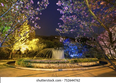 Night view of yangmingshan pond with cherry blossom