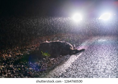 Night wild accident with a roe deer