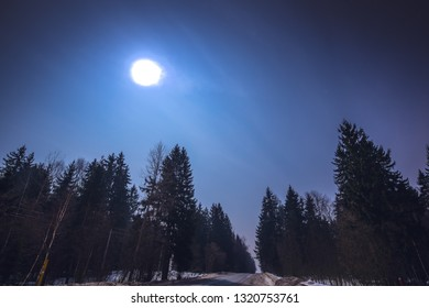 Night winter forest landscape on a full moon.