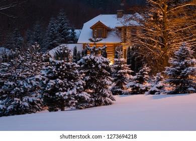 Night in the winter garden