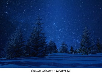 Night winter landscape with trees in snow. Stars in clear sky