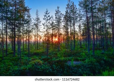 Nightless night in Finnish Lapland