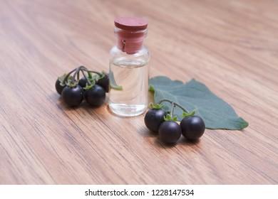 nightshade essential oil in glass jar with fresh nightshade (solanum nigrum inn) on wooden background