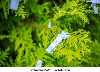 NIKKO, JAPAN - APRIL 21, 2016: Omikuju Charms or fortune paper. Their are tied on pine tree at Toshogu shrine, Nikko, Tochigi, Japan. April 21 2016.