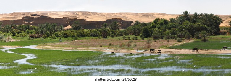 Egypt Field Images, Stock Photos & Vectors | Shutterstock