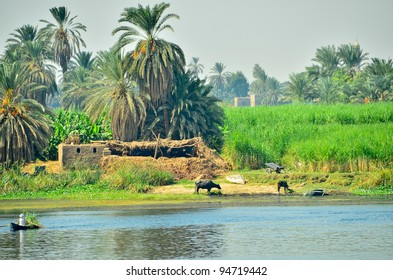 Nile riverside - rural life, Egypt