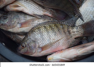 Nile tilapia fish at fresh market for sale.