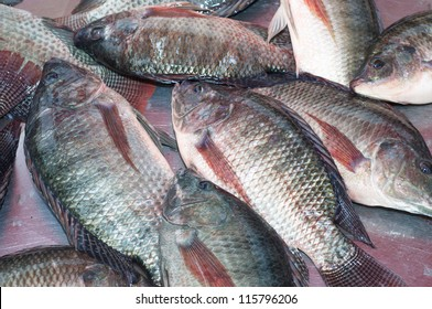 Nile tilapia fishes  freshness ingredient raw gourmet fish seafood fin freshwater fish nile tilapia  malaysia food singapro food thai food chaines food