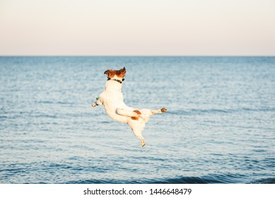 Nimble dog jumps high to catch flying disc at beach