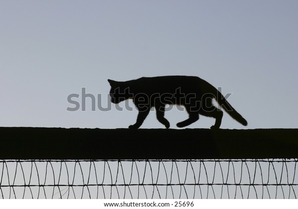 A nimble kitty runs along a fence.Kentucky horsefarm.