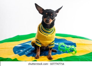 Nina, the brazilian puppy dog