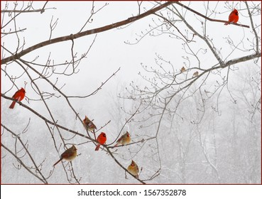 Nine Cardinals Perched on Snowy Branches