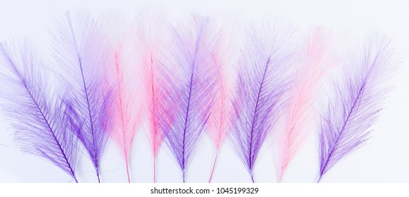 Nine pink and lilac feathers in a row on white background