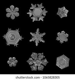 Nine snowflakes isolated on black background. Macro photo of real snow crystals: small star plates with glossy relief surface, short, broad arms, elegant shapes and fine hexagonal symmetry.
