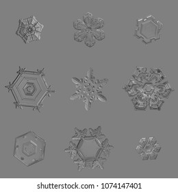Nine snowflakes isolated on uniform gray background. Macro photo of real snow crystals: large stellar dendrites with complex, ornate shapes, hexagonal symmetry, long elegant arms and glossy surface.