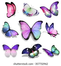 Nine violet blue pink turquoise butterflies on white background