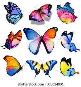 Nine violet blue pink yellow butterflies on white background