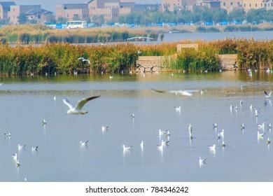 Ningxia Shahu wetland landscape