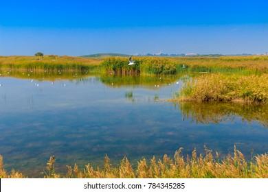 Ningxia Shizuishan Shahu Wetland Natural Landscape