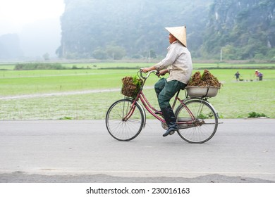 NINH BINH, VIETNAM - FEBRUARY 8, 2014: Vietnamese woman at conical hat on bicycle going for work at rice field. Organic agriculture at southeast asia