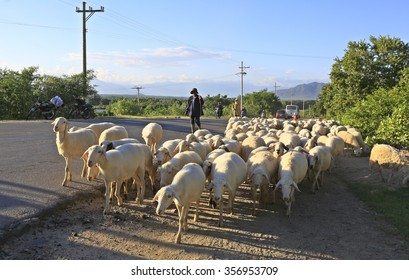 Ninh Thuan, Vietnam, December 30,2015: Farmer with there sheep on the road