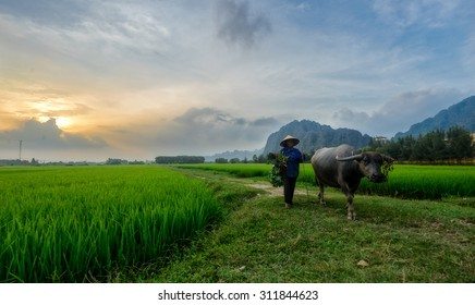 Image result for women with buffaloes in vietnam ninh binh