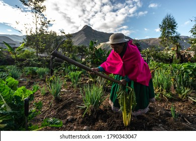 Nisag, Chimborazo / Ecuador - circa 2015: A strong, indigenous woman carrying a hack or axe to work the fields