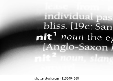 nit word in a dictionary. nit concept.