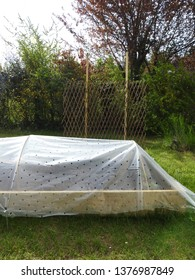 No dig raised bed plot for cultivating vegetables in garden covered in transparent plastic sheath (anti insect perforated forcing film) set in green grass and living fence background