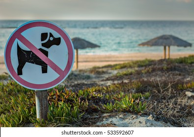 No dogs allowed  sigh on beach background.