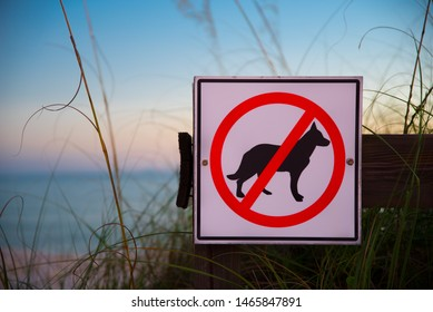 No dogs allowed sign on a wooden fence at the entrance to beach. Dog prohibition. Ocean beach and blue sky on background
