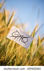 No GMO crops allowed concept with a background of fresh golden wheat ripening in an agricultural field and a handwritten note in the foreground with GMO crossed through in black marker.