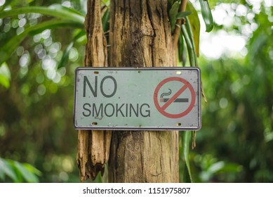 No smoking sign in the garden was attached to the tree to tell people that this area is forbidden to smoke.