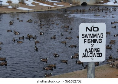 No Swimming or Wading Sign in front of Wading Ducks