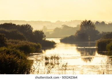 Noah's lake at Shapwick Heath National Nature Reserve. Swans on lake at Avalon Marshes wetland, in Somerset, England UK